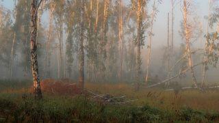 Лесной театр