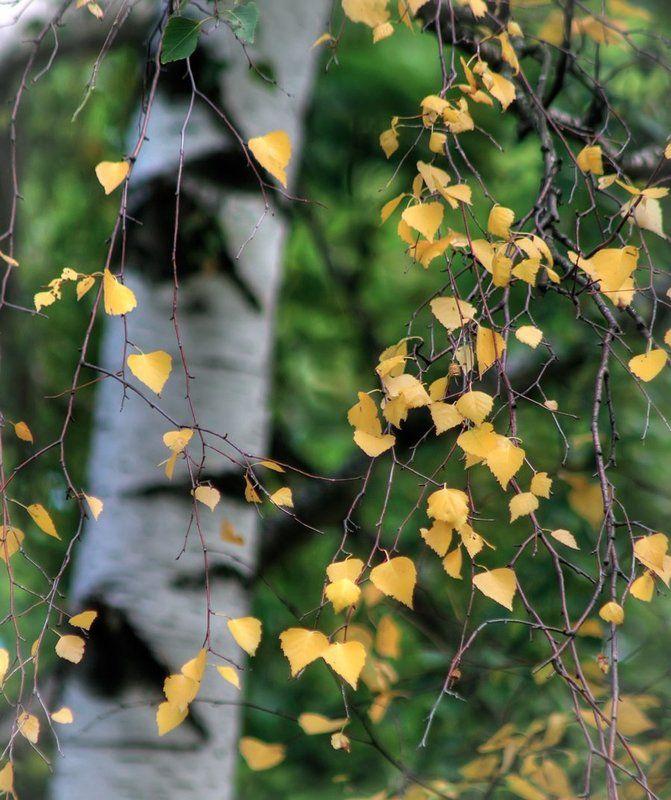 А вот и осень...photo preview