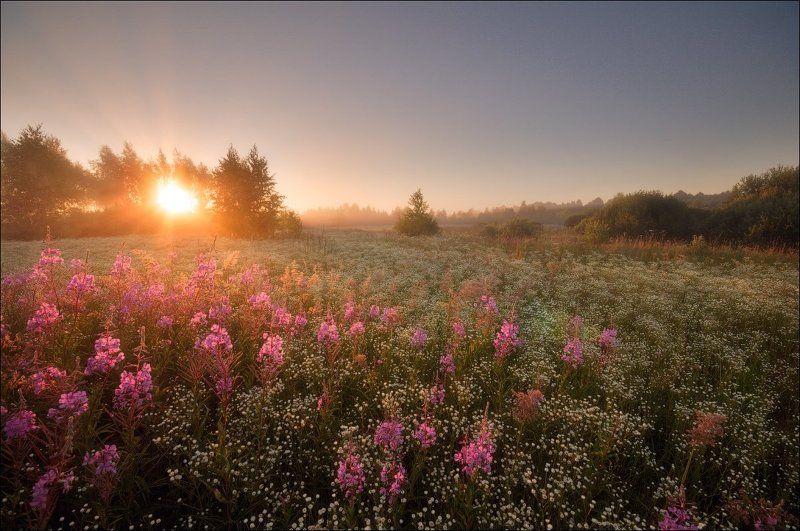 Деревья, Подмосковье, Рассвет, Солнце, Туман, Цветы Утренние цветыphoto preview