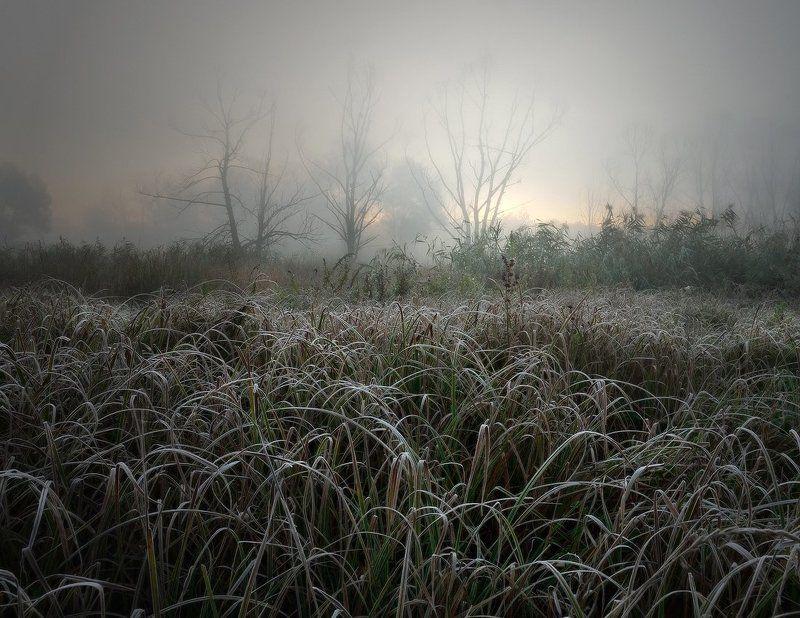 Морозное утро на болотеphoto preview