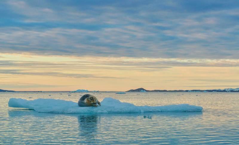 Дикая природа, Море Арктика, Путешествия, Тюлень, Шпицберген Свалбард совсем одинphoto preview