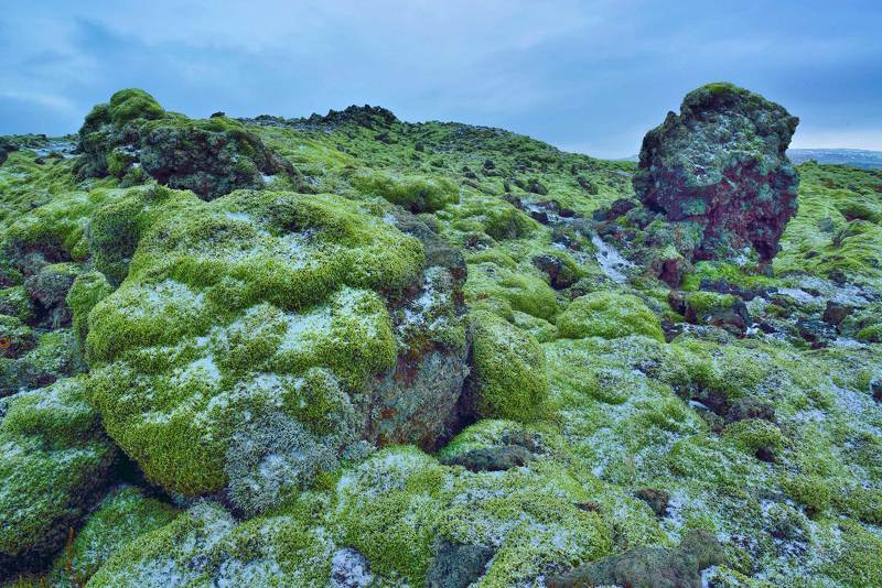 Зима, Зимний мох, Исландия природа, Путешествия исландский мохphoto preview