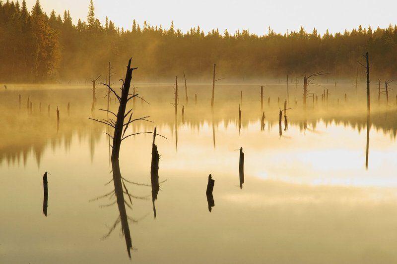 Утро в странном лесу.photo preview