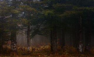 Осень в уральской тайге