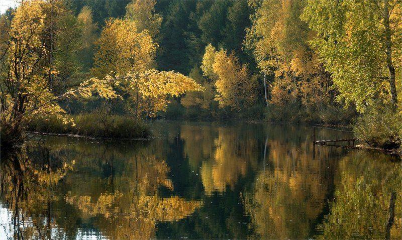 Желто-зеленая осеньphoto preview