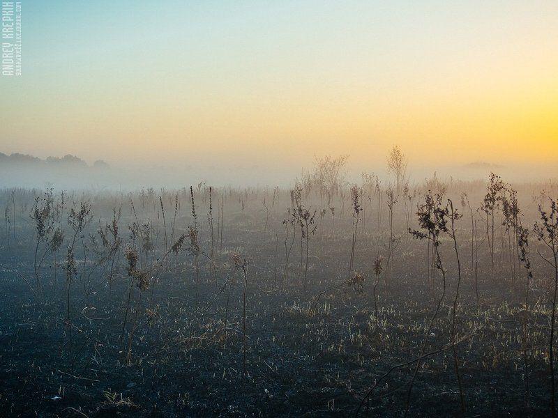 Поле, Природа, Рассвет, Солнце, Трава, Туман Рассвет в Бучеphoto preview