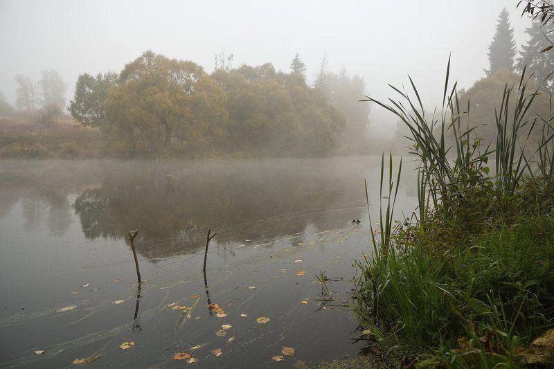 лес, осень, туман, подмосковье Ранним осенним туманным утромphoto preview