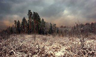 Когда выпал первый снег...