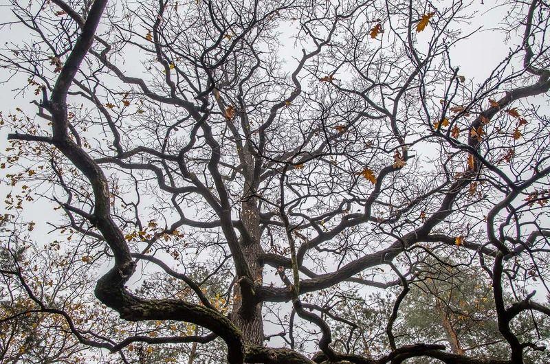 Ветки, Дерево, Деревья, Осень Сплетенье судебphoto preview