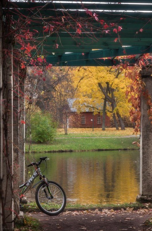 Ораниенбаум, Осень, Парк, Пейзаж Осенняя картинкаphoto preview