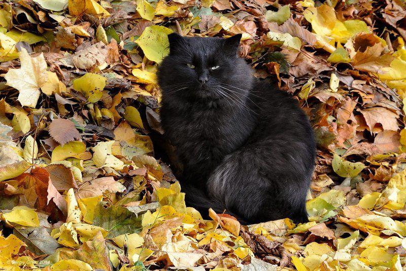 Animal, Cat, Животные, кот, Осень, Холод Осеннее настроениеphoto preview
