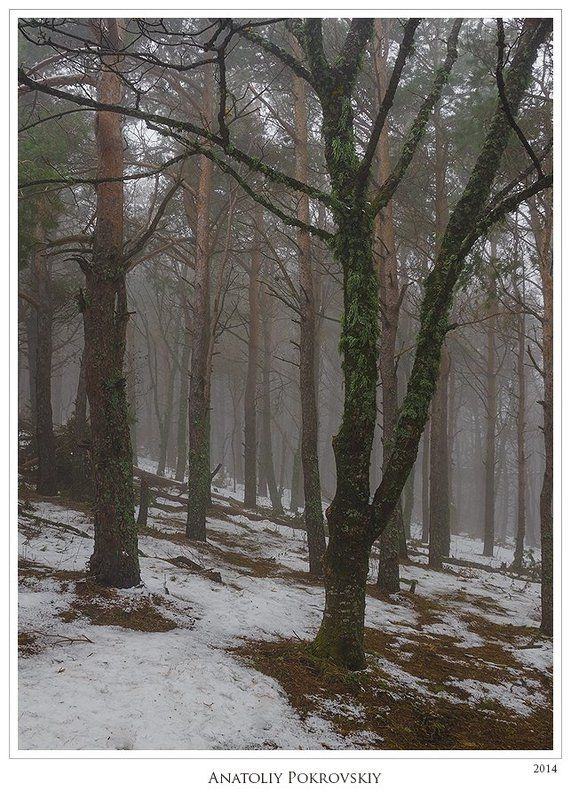 Потаённость туманной тишины зимнего лесаphoto preview