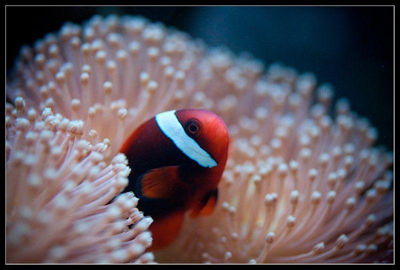 Из жизни рыб-одиночек.photo preview