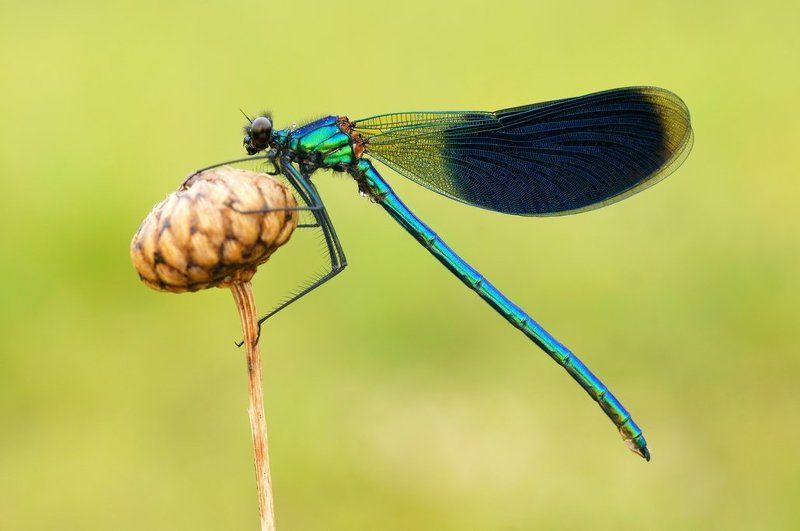 What important dragonfly ...photo preview