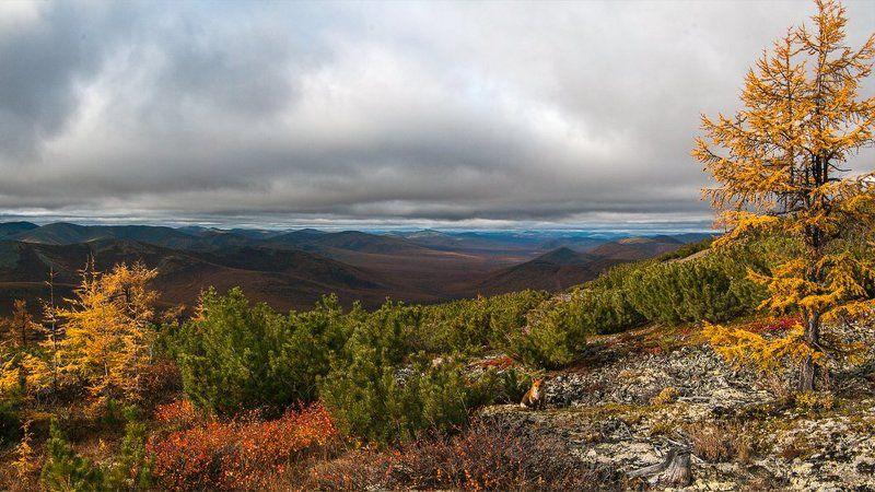 якутия, оймяконский район, лис, лиственница, осень Привет, братец лисphoto preview