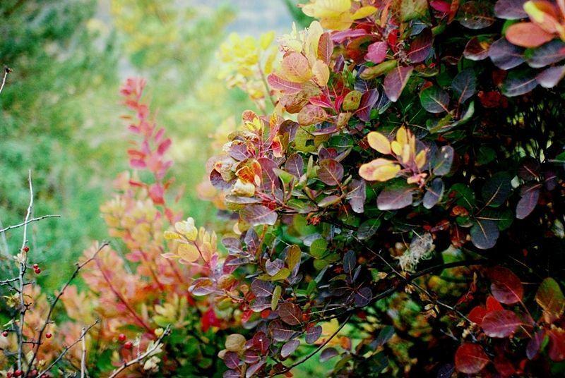 Autumn, Codak, Colors colorphoto preview