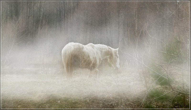Старость.Одиночество...photo preview