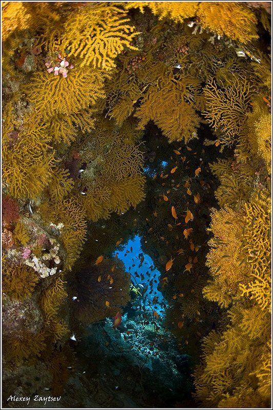 зайцев, обучение, подводной, фотографии, , красное, море, пещерка Cavephoto preview