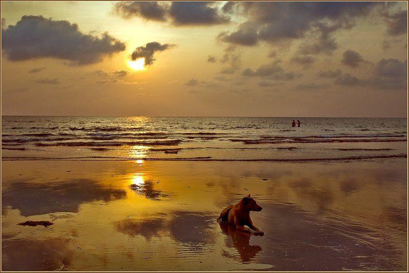 таиланд, ко чанг, волна, закат, собака Вечер на Чангеphoto preview