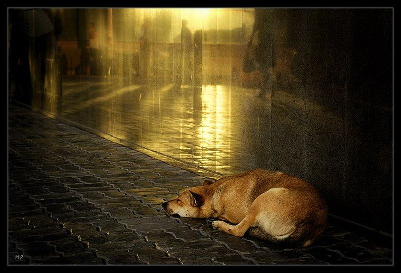 собака О снах привокзальной собаки...photo preview