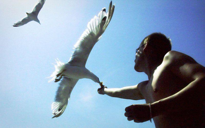 чайки, море, птицы, природа Чайкиphoto preview