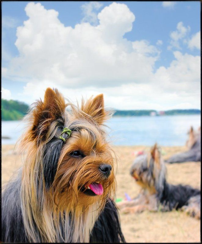Modern Dog Hair Trimmingphoto preview