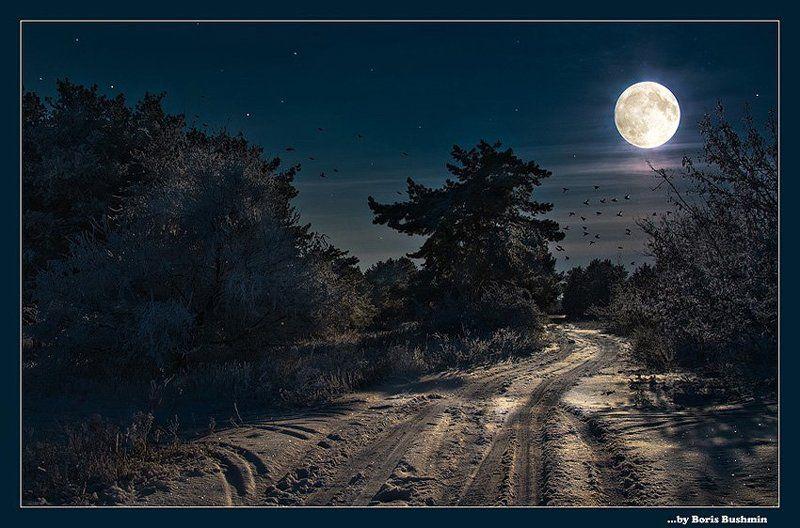 пейзаж, природа, ночь, зима, снег, лес, луна * Зимняя сказка *photo preview