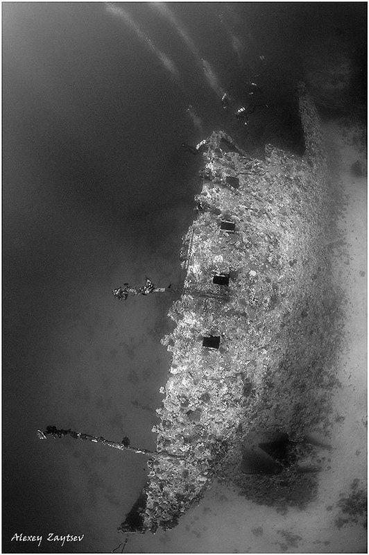 зайцев, обучение, подводной, фотографии, , красное, море, рэк Carnaticphoto preview