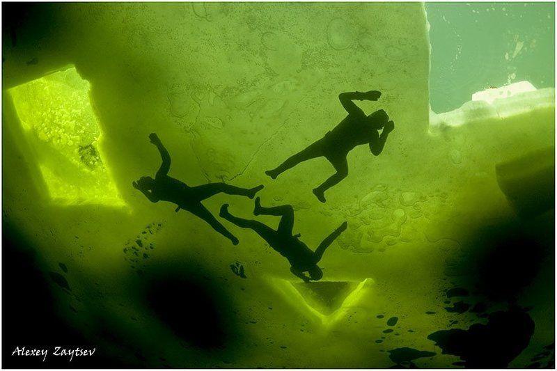 зайцев, обучение, подводной, фотографии, , белое, море, фри, дайверы Ниндзя подо льдомphoto preview