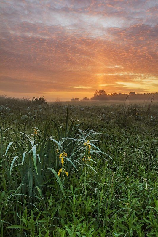 Перед восходом солнцаphoto preview