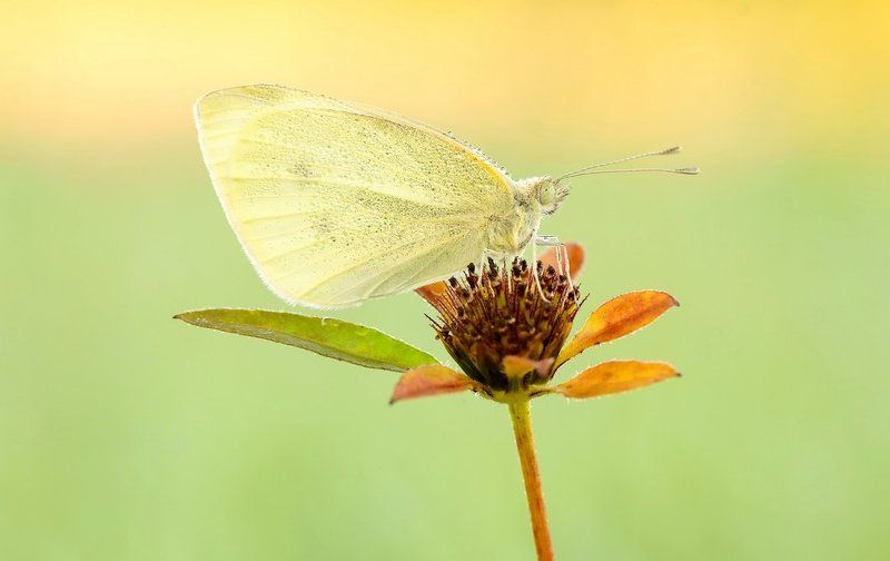 When the butterfly is sleeping ...photo preview