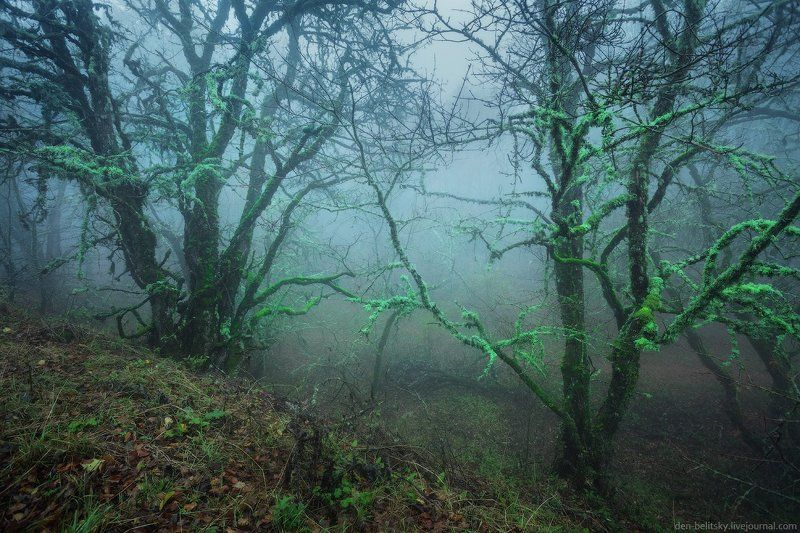 Крым, Лес, Облака, Осень, Пейзаж, Туман, Утро Мистический лесphoto preview