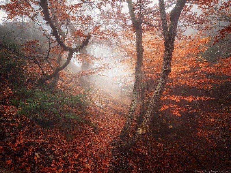 Деревья, Крым, Лес, Облака, Осень, Пейзаж, Туман, Утро Мир туманов Ай-Петриphoto preview