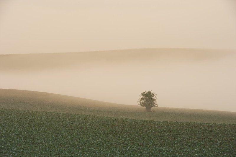 mist shrubphoto preview