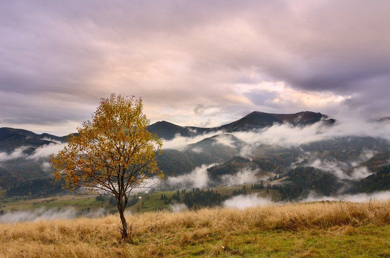 Clouds, Fog, Karpaty, Landscape, Mountains, Tree, Горы, Дерево, Карпати, Облака, Пейзаж, Туман photo preview