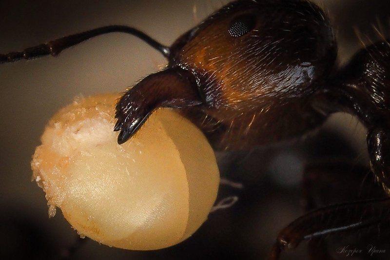 Склады в муравейникеphoto preview
