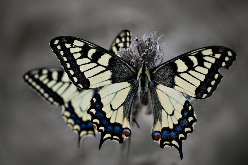 butterfliesphoto preview