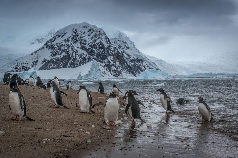 Антарктида, Животные дикие животные, Ледник, Пингвины, Путешествия, Снег В далекой Антарктидеphoto preview