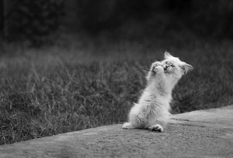 Про белую кошкуphoto preview