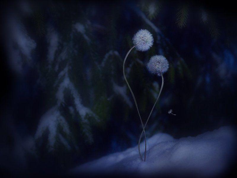 зима, одуванчики, грусть, печаль как-нибудь перезимуем...?photo preview