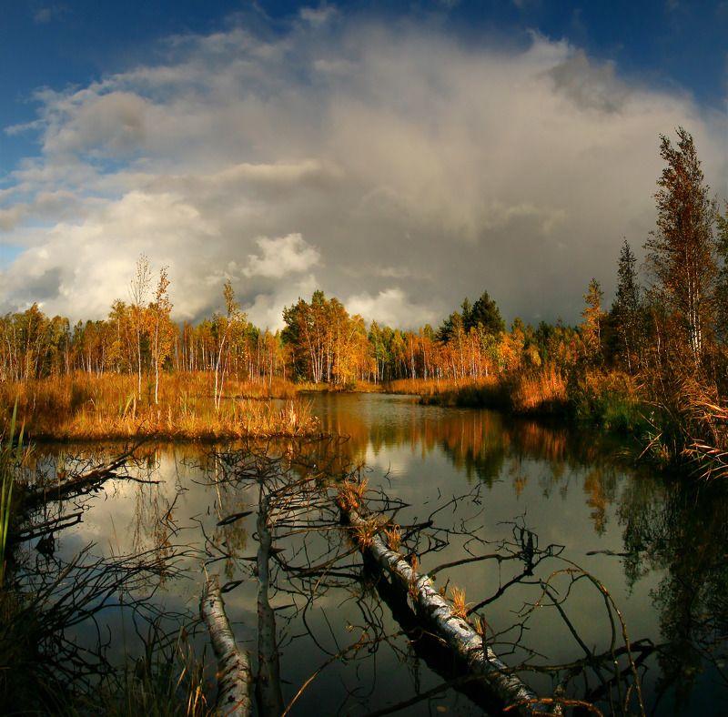 Осень на Шатурских болотах.photo preview