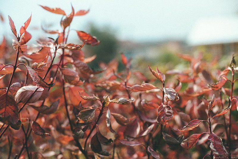 Bokeh, Family garden, Nikon, Nikon d 800, Дача, Красиво, Осень, Природа, Россия Моменты. Осень.photo preview