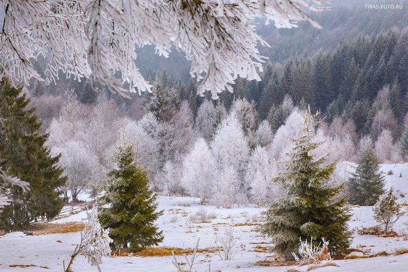 Зима, Карпаты, Снег Сахарная пудраphoto preview
