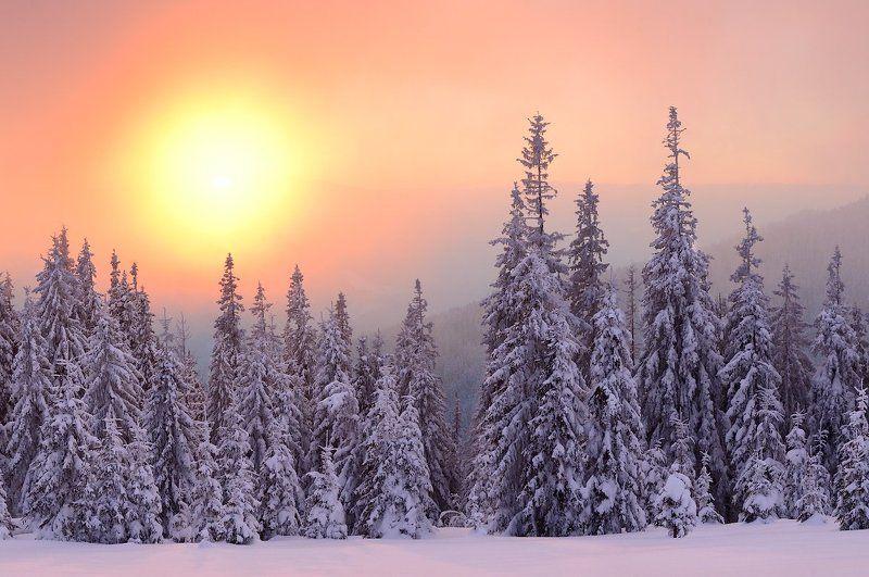 Fog, Forest, Karpaty, Landscape, Pine, Snow, Sunset, Zakarpattja, Елки, Закарпатье, Закат, Карпати, Лес, Пейзаж, Снег, Туман photo preview