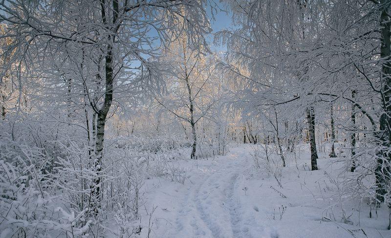 Тропинками зимы...photo preview
