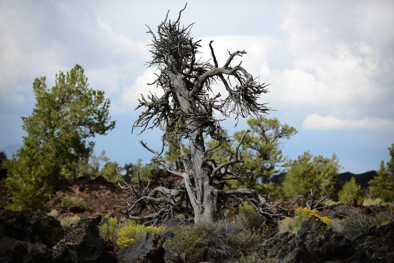 мертвое деревоphoto preview