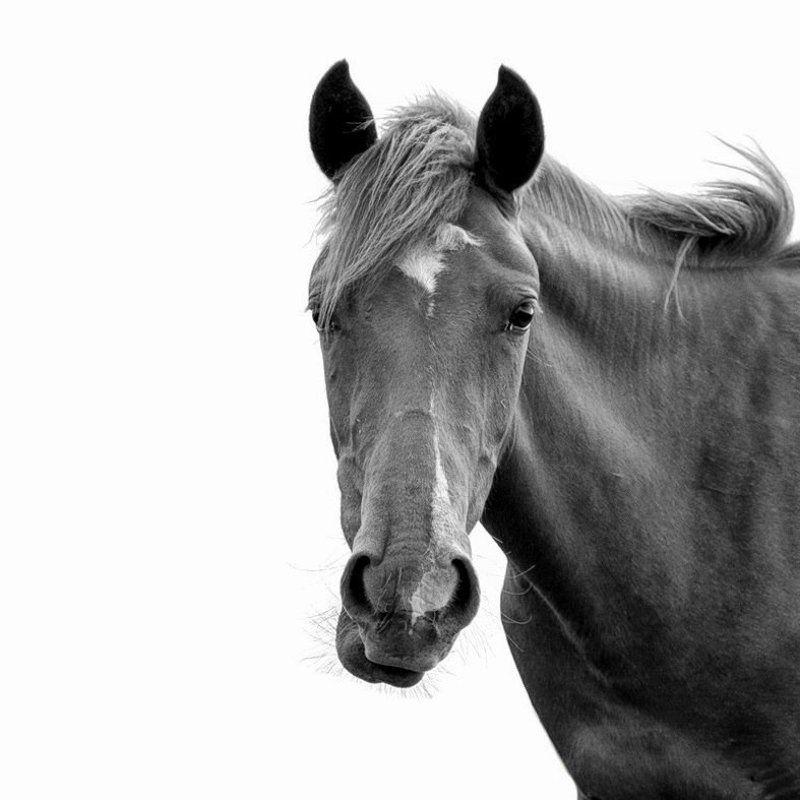 Horsephoto preview