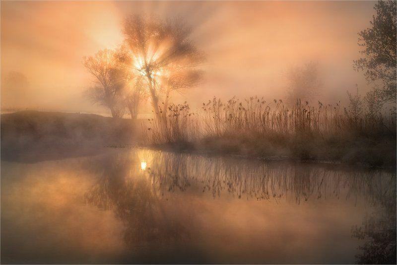 утро, пейзаж, лучи, туман, река, камыш, отражения Лучистое Утроphoto preview