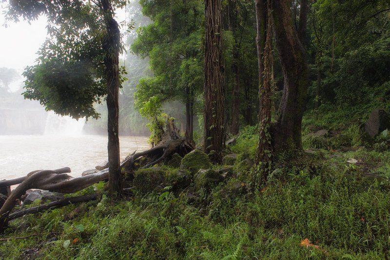 В джунгляхphoto preview