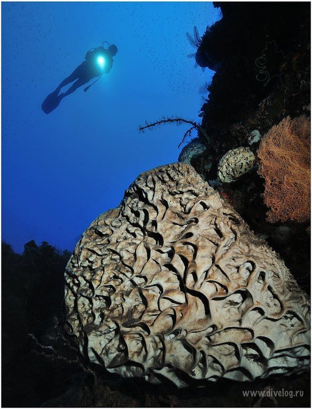 Горонтало, Дайвинг, Кораллы, Широкий угол ГОРОНТАЛО-1photo preview